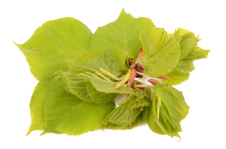 tilo: hojas de tilo