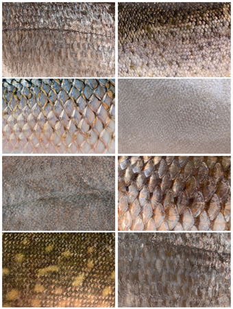 fish fishing: collection of fish scales Stock Photo
