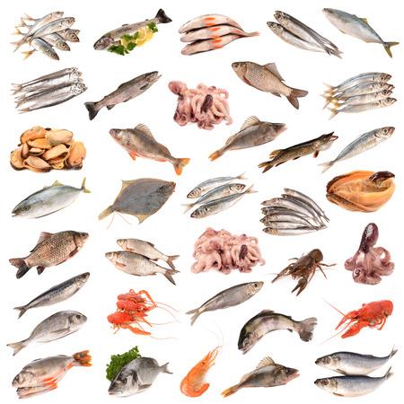 collection de produits de poisson