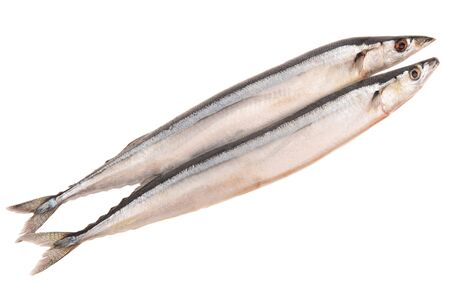 forked tail: saury on a white background