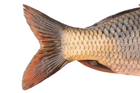 tail: tail carp