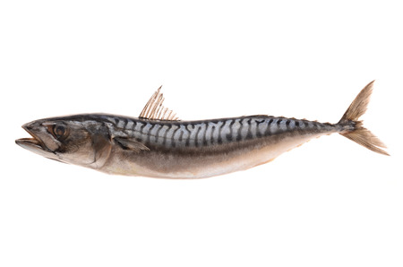 coldblooded: Mackerel on a white background