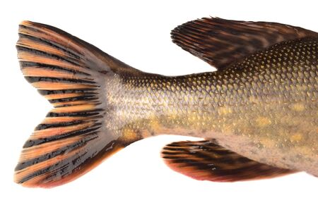 tail: pike tail Stock Photo