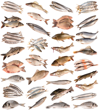 collection fishes