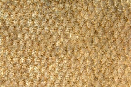 escamas de peces: peces de oro hermosa escalas de primer plano como fondo Foto de archivo