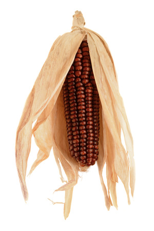 Dry fodder corn on a white background