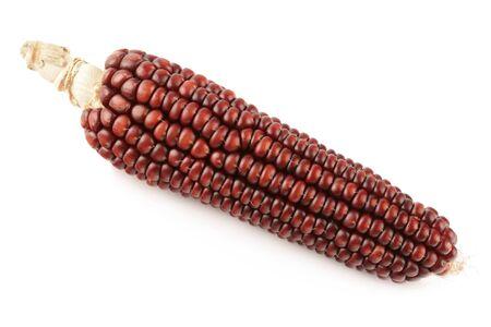 fodder corn: Dry fodder corn on a white background