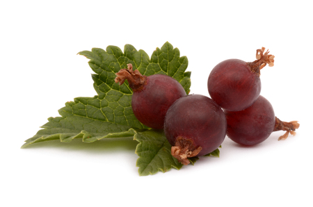 ribes: Fresh gooseberries isolated on a white background