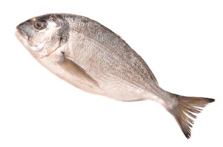 fresh sea bream isolated on white background