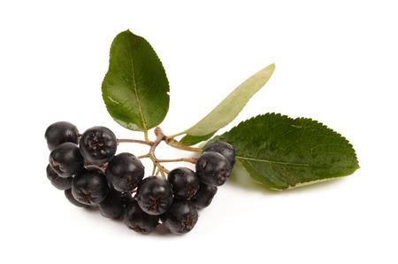 isolated fresh chokeberry on a white background