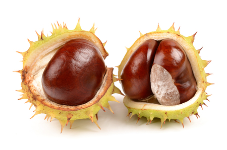 horse chestnut seed: Fresh chestnuts isolated on a white background