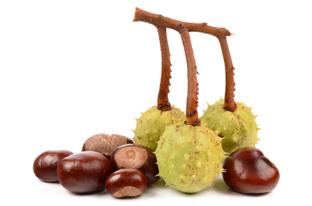 Fresh chestnuts isolated on a white background