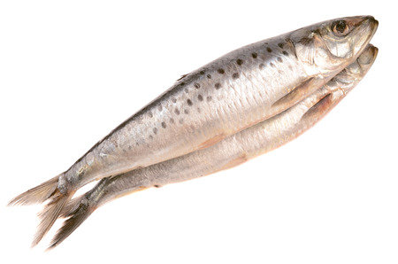 fresh herring isolated on a white background
