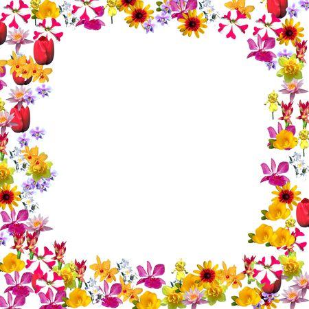 Flower Stock Photo - 2327594