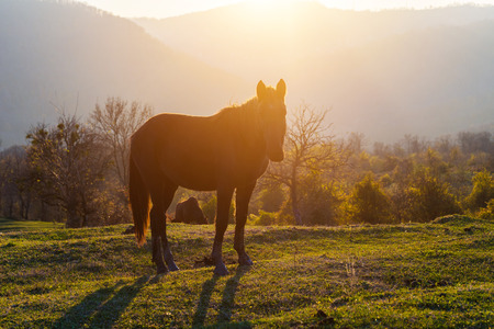 On the green lawn stands a horse, behind it the mountains, the dawn Stock Photo