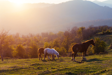 mountains in the morning sun, on the green lawn are horses