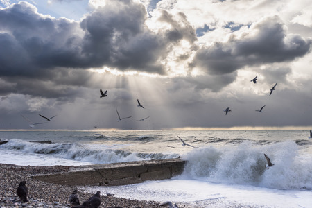wildlife, sea, seashore, waves, birds fly over the water, the sun went behind the clouds