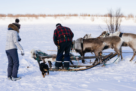 in the north of Iceland the girl is going to go for a drive on sleigh, with deer