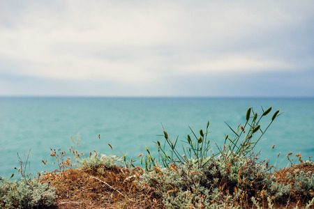 inspiring nature, blue calm sea and gray sky, on a cliff grow flowers