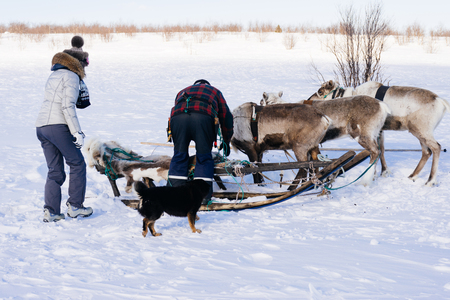 in the far cold north people get into a reindeer team