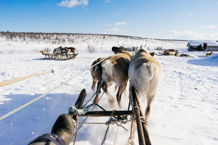 In the north, riding on a white snow is a team with deer Stock Photo