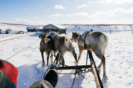 A team of deer in the background of a snow field Stock fotó