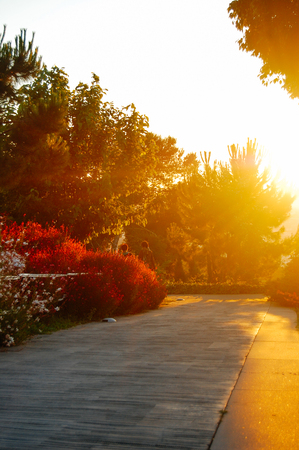 beautiful large garden with green trees and flowers in the rays of the evening sun Stock Photo