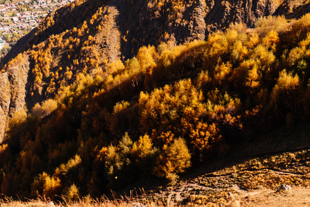 autumn forest against the backdrop of high mountains