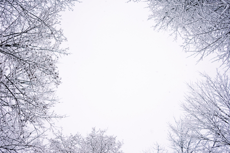 fascinating nature, branches of trees covered with white snow, frost and cold