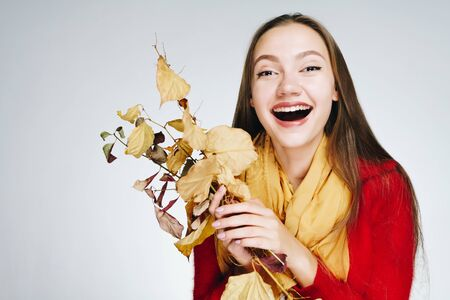 joyfully laughing girl, with beautiful teeth, in a red sweater and a yellow scarf holds autumn branches with leaves in her hands