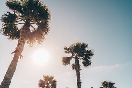 scenery. tops of palm trees against the background of the sky and the sun moving towards sunset Zdjęcie Seryjne