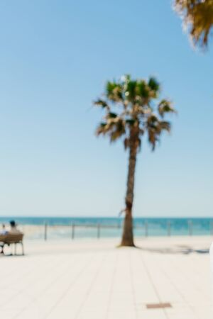 blurred lonely palm tree on the pavement near the ocean Zdjęcie Seryjne