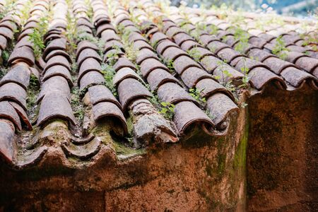 view of a part of the old tiled roof overgrown with grass