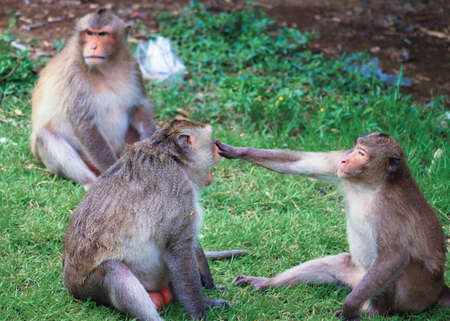 monkeys are fun to play.