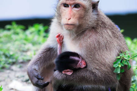 family of mother and child monkey
