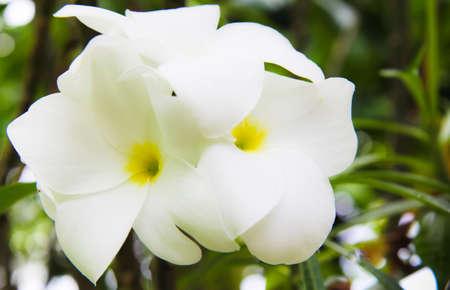 Flowers in the garden. Stock Photo - 10016068