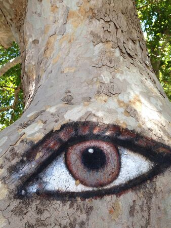 eye: Eye son tree in Rhodos  Stock Photo