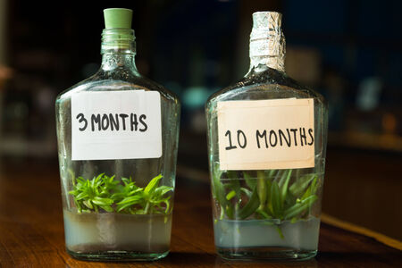3 month and 10 month  young orchids in bottle photo