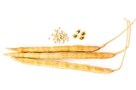 mlonge: Moringa Seed