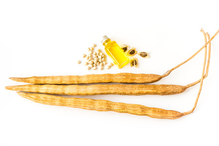 mlonge: olio di semi di Moringa