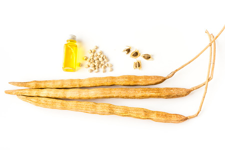 moringa seed oil photo