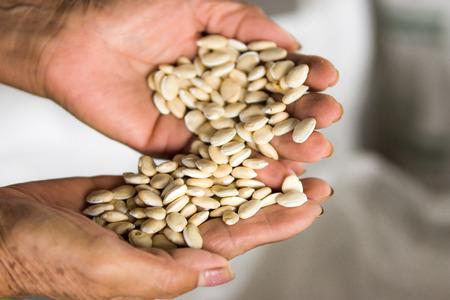 Lablab Bean in hands