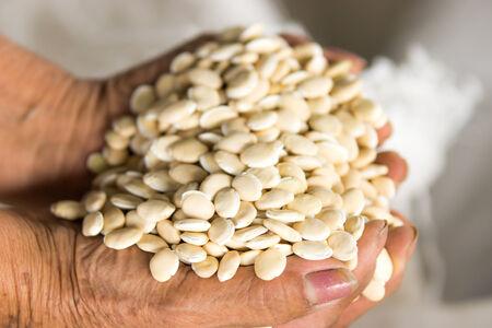 Lablab Bean