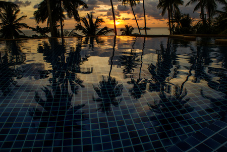 Coconut Tree Reflextion photo
