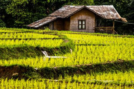 Maeklangloung Chiangmai