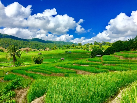 Step rice field with blue sky