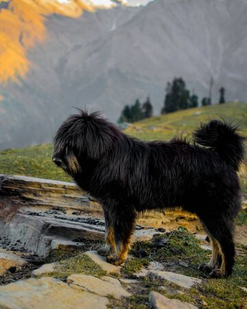A herding dog in the mountains on a cool autumn morning