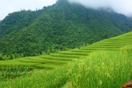 Landscape of Sappa in Northern Vietnam. Stockfoto
