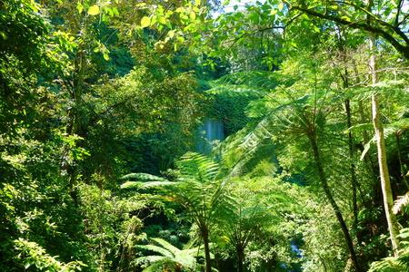 Benangstokel and Benang Kelambul waterfall located in Central Lombok, Indonesia, South-East Asia 版權商用圖片