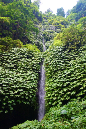Sekumpul waterfall in Bali surrounded by tropical forest, Indonesia, South-East Asia